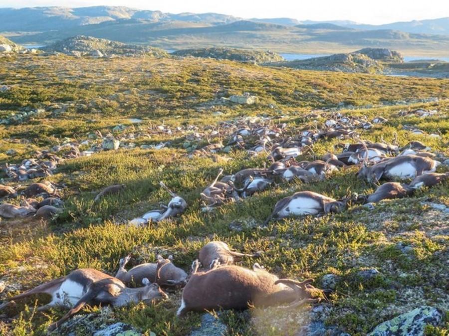 Fulmine massacra 323 renne
