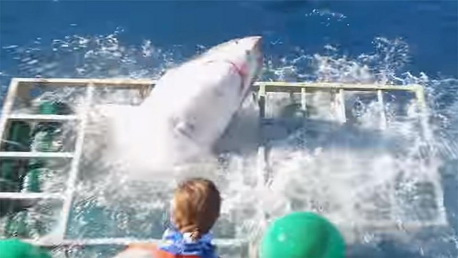Watch: Diver's miraculous escape after shark smashes into cage